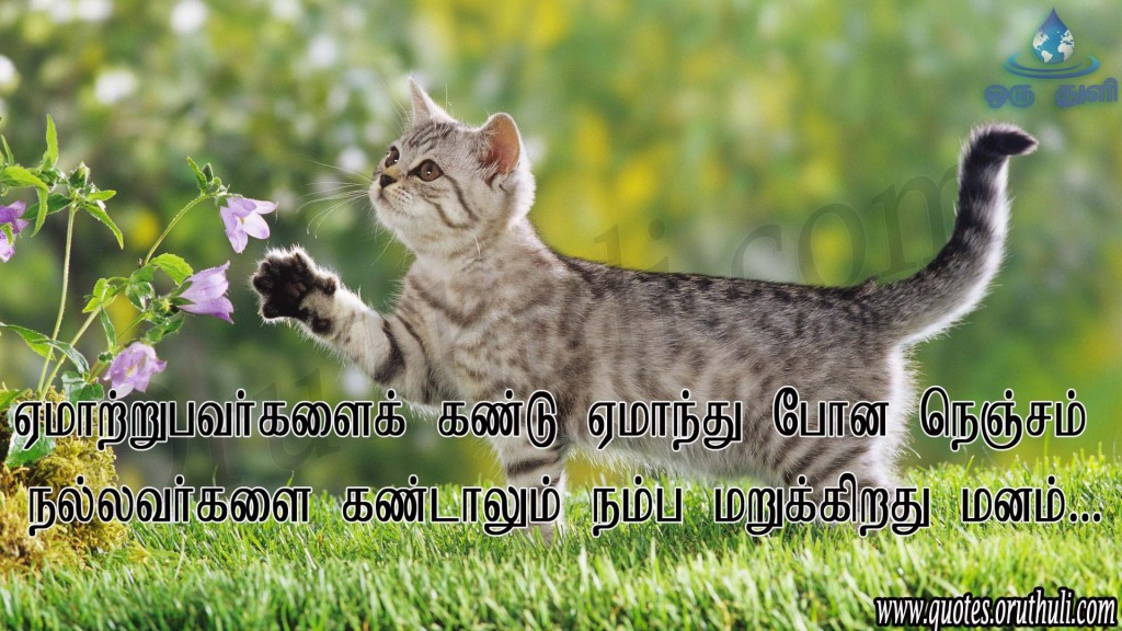 animal-cat-playing-in-garden